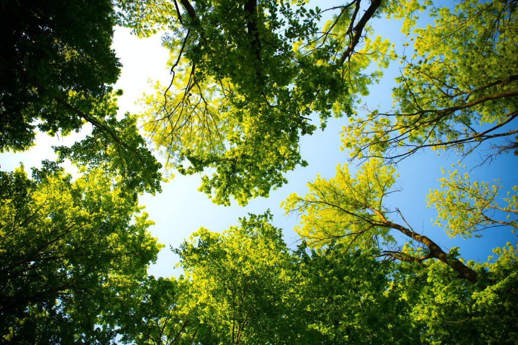 green trees and a blue sky